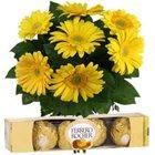 Hand Bunch of Yellow Roses with Ferrero Rocher
