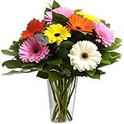 Suave Mixed Gerberas in a Glass Vase