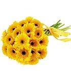 Deliver Yellow Gerberas Bunch Online