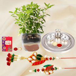 Holy Tulsi Plant n Silver Plated Rakhi Thali for Bhaiya Bhabhi
