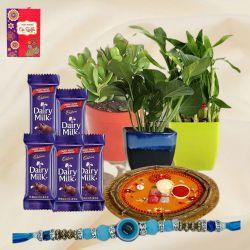 Good Luck Plants Trio, Cadbury Chocolates n Pooja Thali for Rakhi