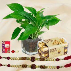 Money Plant with Ferrero Rocher n Rudraksha Rakhi Pair