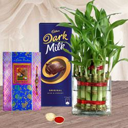 Rakhi Gift of Lucky Bamboo Plant n Cadbury Chocolate