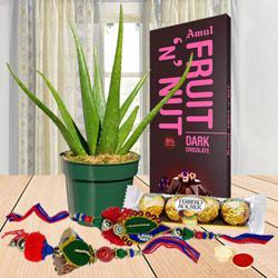 Aloe Vera Plant with Assorted Chocolates for Bhaiya Bhabhi<br>