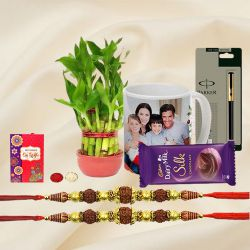Lucky Bamboo Plant with n Twin Rudraksha Rakhi n Gifts