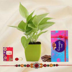 Send Rakshabandhan Wishes with a Money Plant, Cadbury Chocolates & a Rakhi